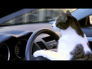 ねこドライバー