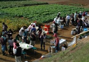 体験農園3